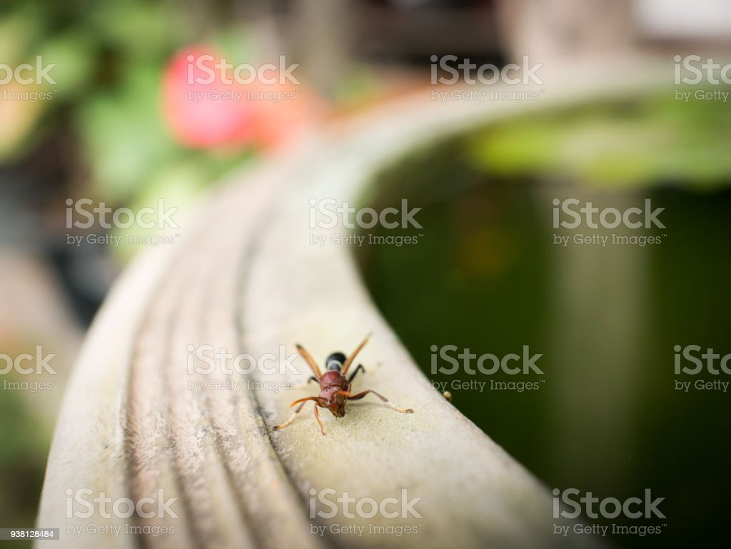Crawling Wasp Weakness on The Edge of The Pond stock photo