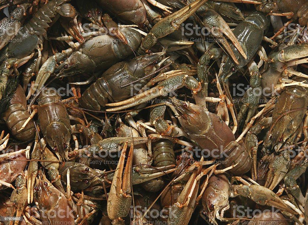 Crayfish background royalty-free stock photo