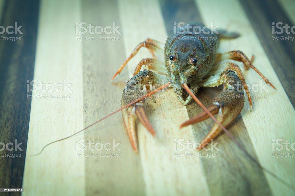 Crayfish on the wood background zbiór zdjęć royalty-free