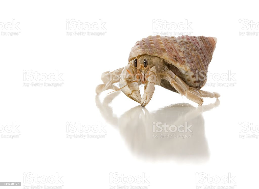 Crazy Crab stock photo