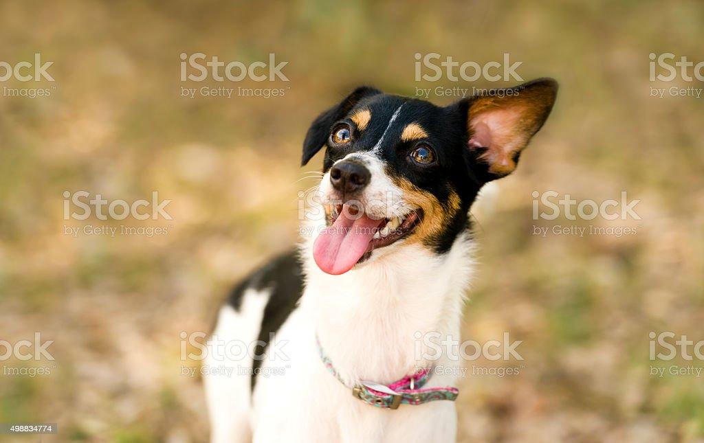 Crazy Hund – Foto