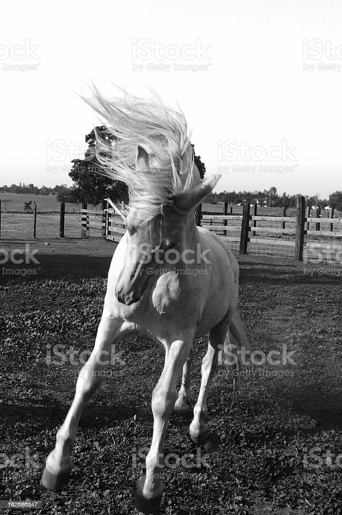 Crazy Horse royalty-free stock photo
