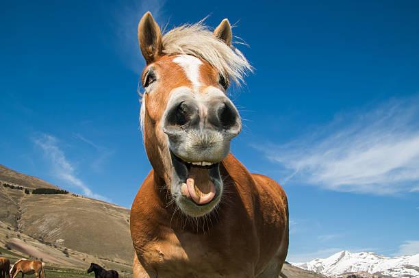 crazy horse - lustige pferde stock-fotos und bilder