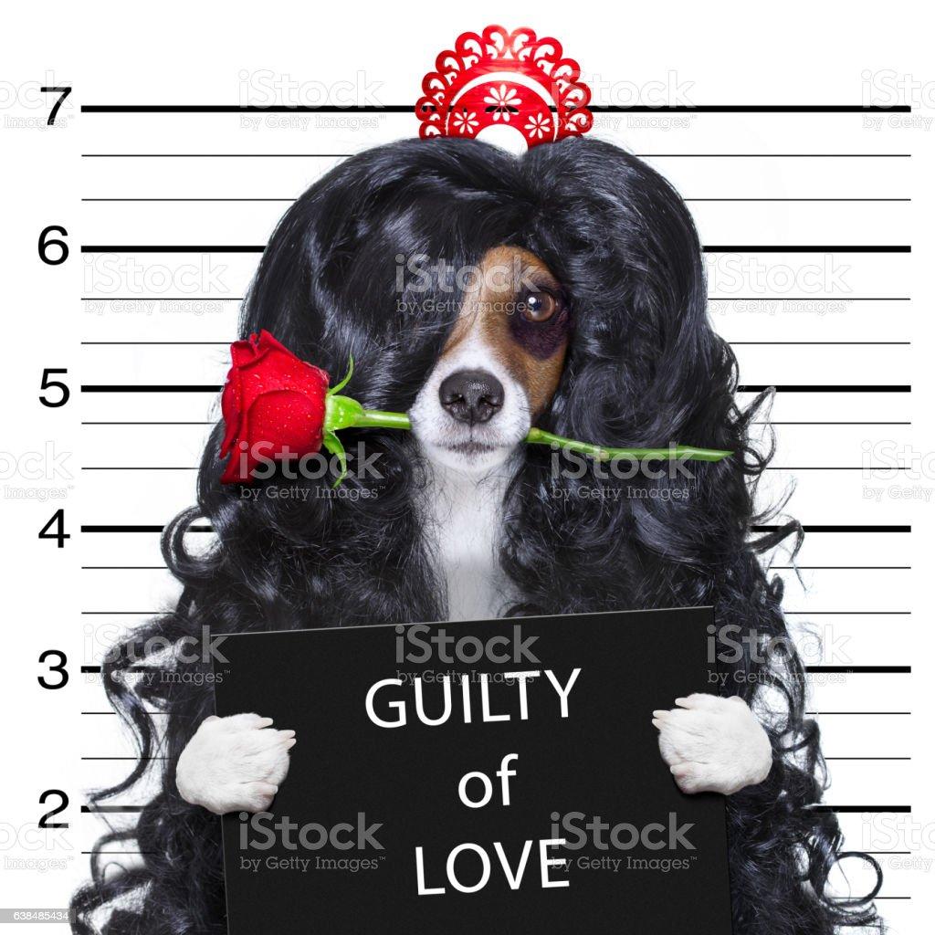 crazy in love valentines dog mugshot stock photo