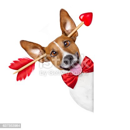 638484874 istock photo crazy in love valentines dog 637353984