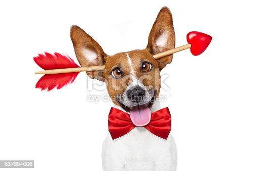 638484874 istock photo crazy in love valentines dog 637354006