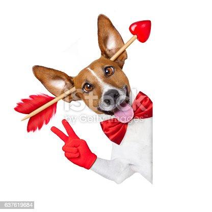 638484874 istock photo crazy in love valentines dog 637619684