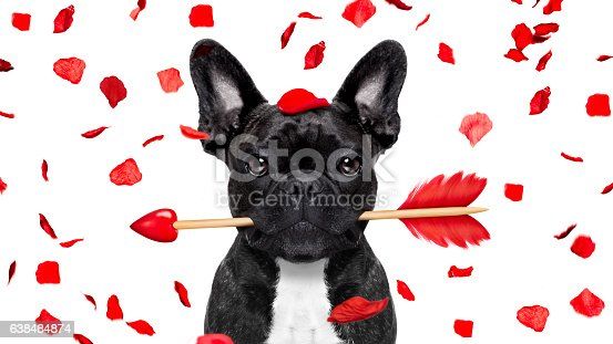 istock crazy in love valentines dog 638484874