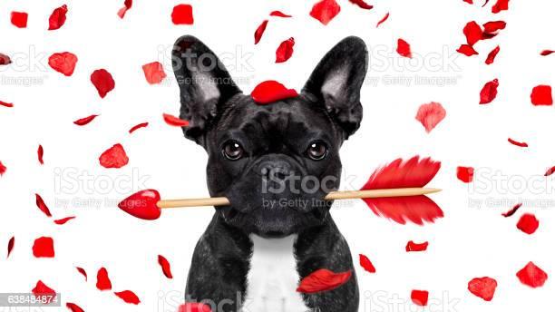 Crazy in love valentines dog picture id638484874?b=1&k=6&m=638484874&s=612x612&h=jnjo3ozy zmmzyaqassiob4z3ehkzvm8cg4rdjizhpy=