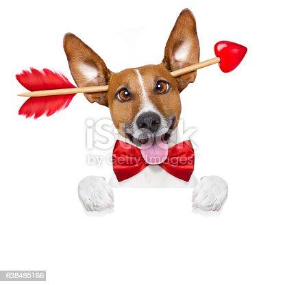 638484874 istock photo crazy in love valentines dog 638485166