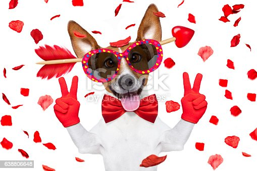 638484874 istock photo crazy in love valentines dog 638806648