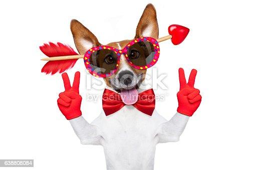 638484874 istock photo crazy in love valentines dog 638808084