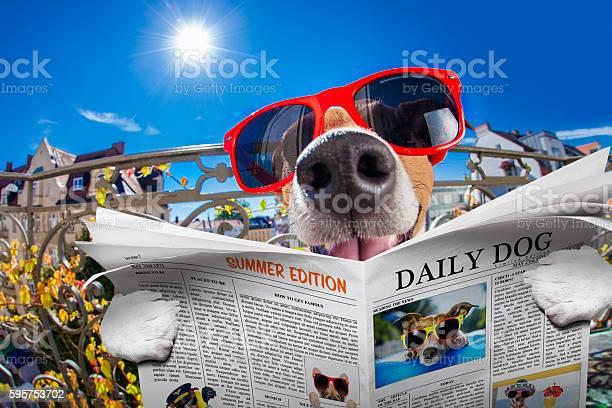 Crazy silly dumb dog fisheye look picture id595753702?b=1&k=6&m=595753702&s=612x612&h=oeiya7lh4ckky6zou2gag1mtrib8fsjrnobmyrphqbi=