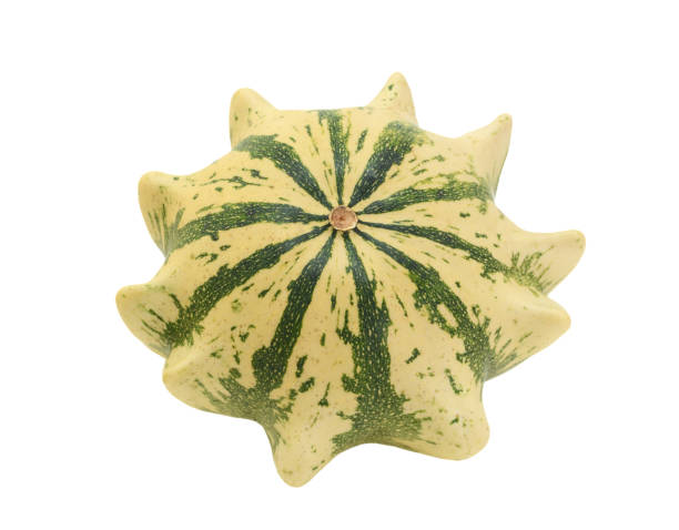 cream and green striped ornamental gourd, crown of thorns - gourd stock photos and pictures