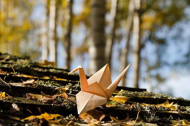 cream colored crane in a birch wood - origami anleitungen stock-fotos und bilder