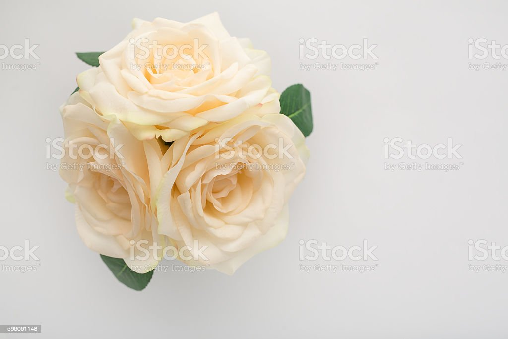 Cream Roses royalty-free stock photo