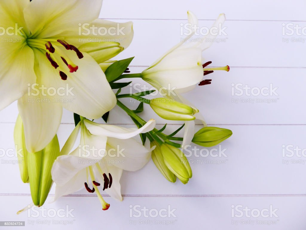 Cream White Lilies And Flower Bulbs Stock Photo More Pictures Of