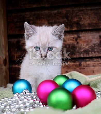 christmas kitten with decoration