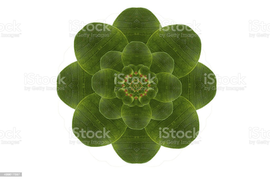 Create flower from leaf royalty-free stock photo