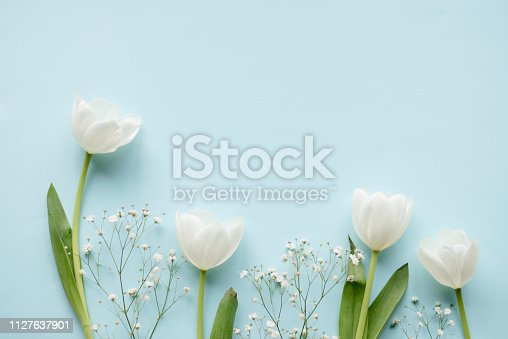 Creative arrangement of white tulips on blue background.
