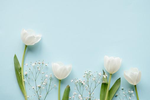 Creative arrangement of white tulips on blue background
