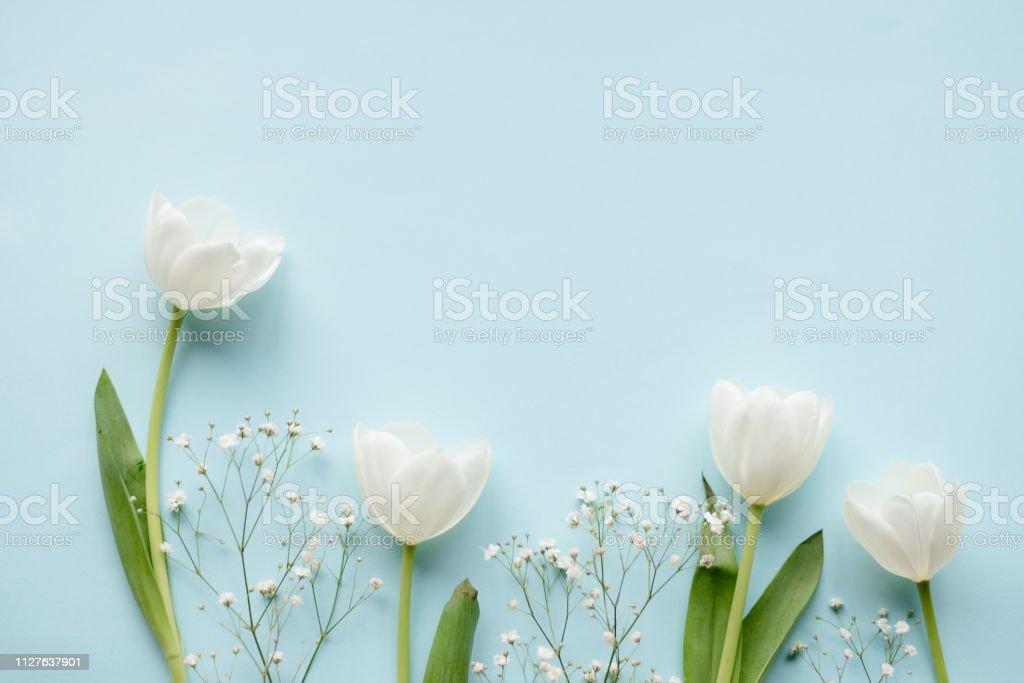 Kreative Anordnung der weißen Tulpen auf blauem Hintergrund – Foto