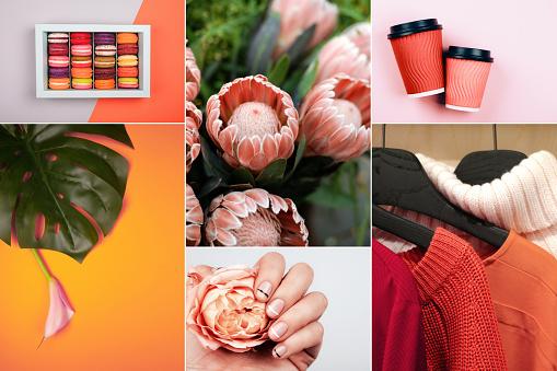 Creative Collage In Living Coral Color - Fotografie stock e altre immagini di 2019