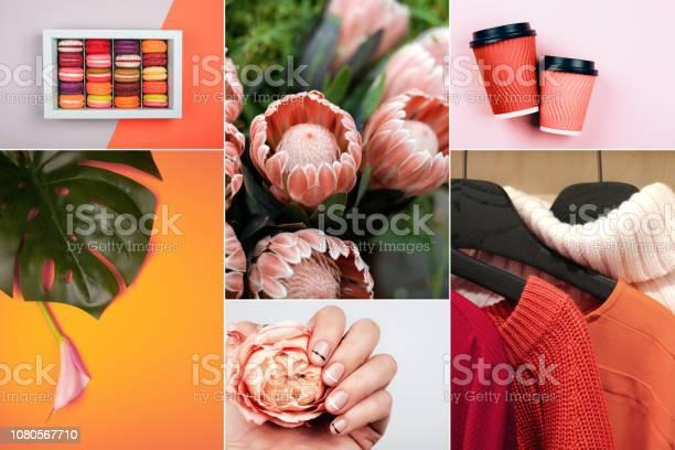 Photo libre de droit de Création Collage En Couleur Corail Vivant banque d'images et plus d'images libres de droit de 2019