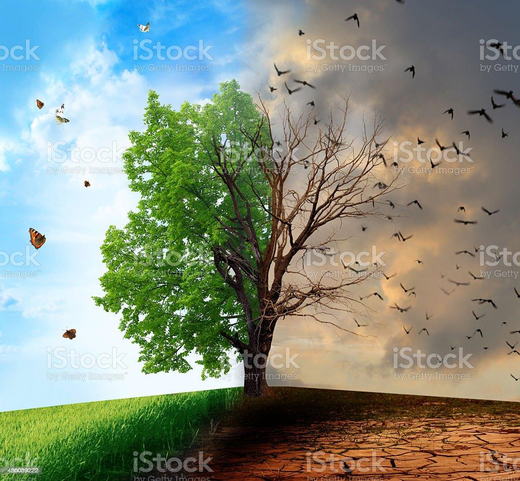 Environmental Concept Earthfriendly Landscapes: Creative Concept Landscape Live And Dead Tree Stock Photo