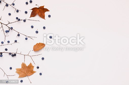 Creative dry tree with yellowed leaves on white background with copy space