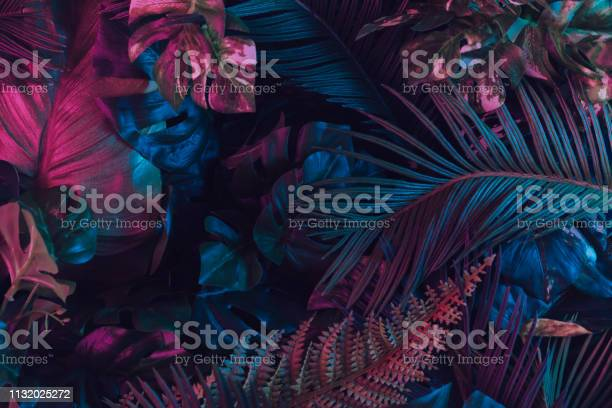 Creative fluorescent color layout made of tropical leaves picture id1132025272?b=1&k=6&m=1132025272&s=612x612&h=b3s2n2rdtfa6jl pwemsukdwbmkgv87r869g98npg7e=