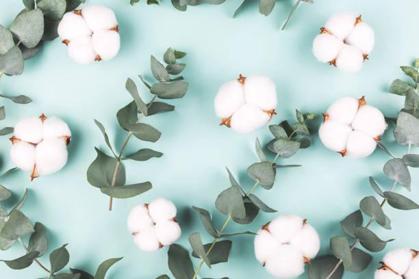 Kreativer Rahmen mit frischen Eukalyptus-Brances und Baumwoll-Blumenköpfen. – Foto