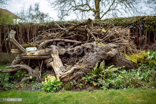 dead wood, insect friendly garden design. natural flowers and creative garden arrangements.