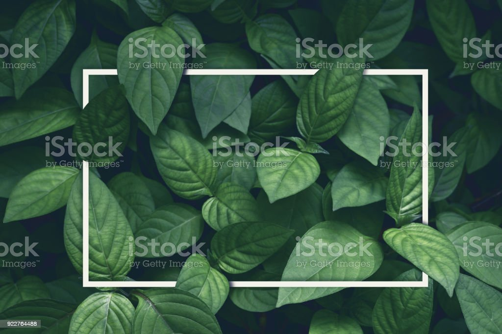 creative layout, green leaves with white square frame, flat lay, for advertising card or invitation - Royalty-free Above Stock Photo