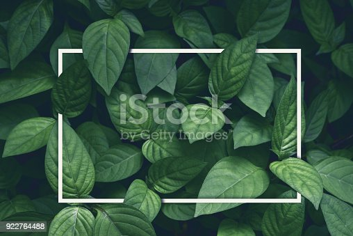 istock creative layout, green leaves with white square frame, flat lay, for advertising card or invitation 922764488