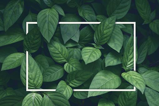 창조적인 레이아웃 녹색 잎 백색 사각 프레임 평면으로 누워 광고 카드 또는 초대장 0명에 대한 스톡 사진 및 기타 이미지
