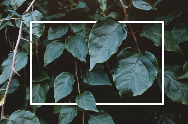 Creative layout green leaves with white square frame stock photo