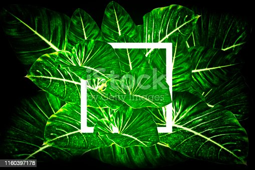 655667160 istock photo Creative layout made leaves with white paper frame - Flat lay - Nature concept 1160397178