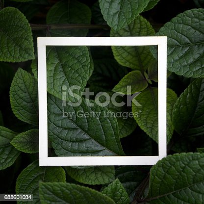 655667160 istock photo Creative layout made leaves with white paper frame. Flat lay. Nature concept 688601034