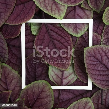 655667160 istock photo Creative layout made leaves with white paper frame. Flat lay. Nature concept 688601518