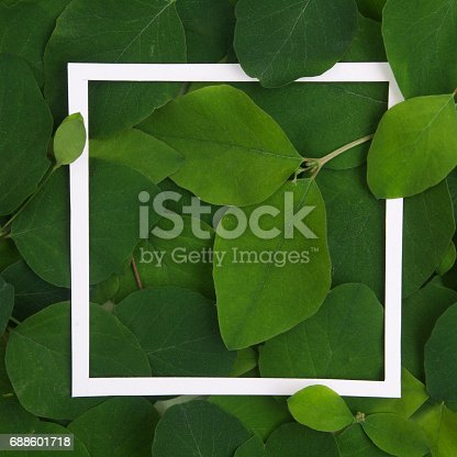 655667160 istock photo Creative layout made leaves with white paper frame. Flat lay. Nature concept 688601718
