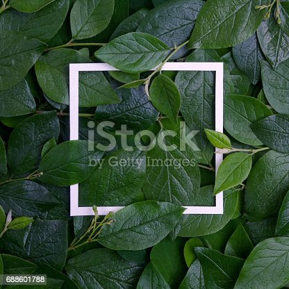 655667160 istock photo Creative layout made leaves with white paper frame. Flat lay. Nature concept 688601788