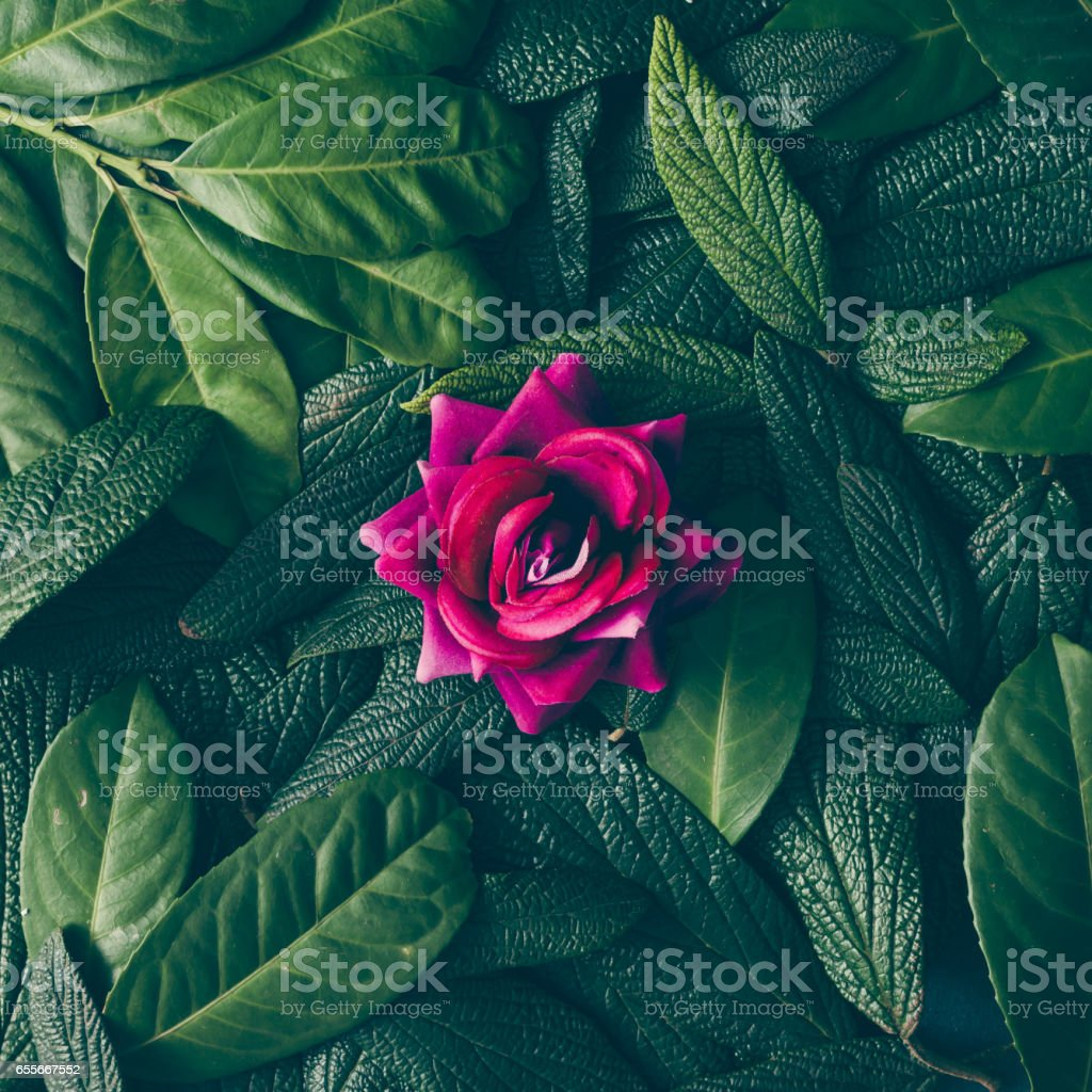 Creative layout made of green leaves and purple flower. Flat lay....