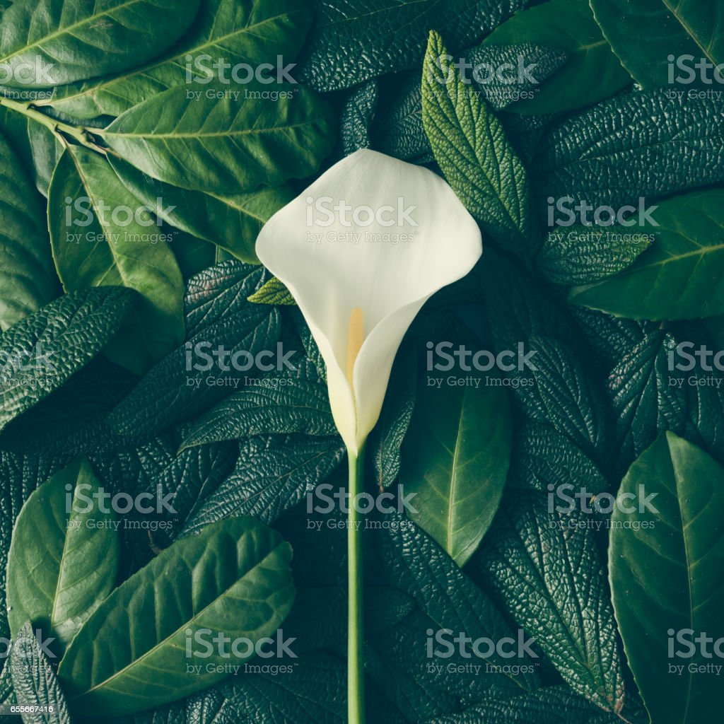 Creative layout made of green leaves and white flower. Flat lay....