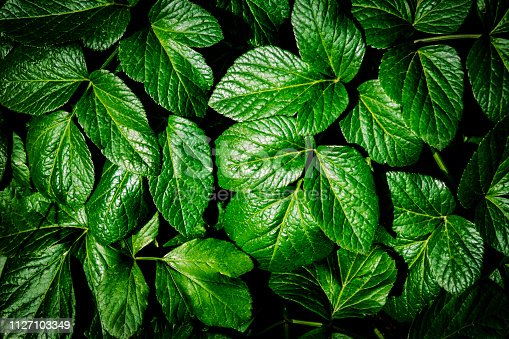 655667160 istock photo Creative layout made of green leaves. Flat lay. Nature concept 1127103349