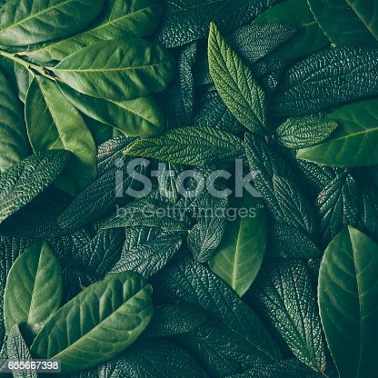 istock Creative layout made of green leaves. Flat lay. Nature concept 655667398