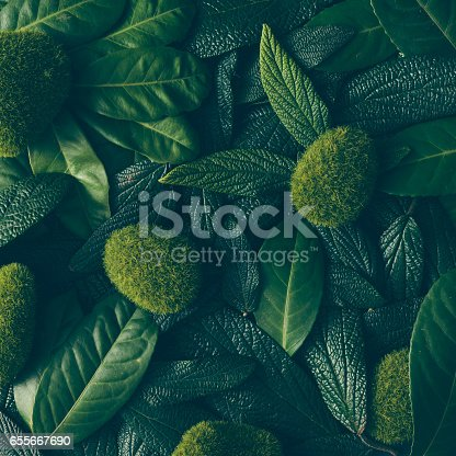 istock Creative layout made of green leaves. Flat lay. Nature concept 655667690