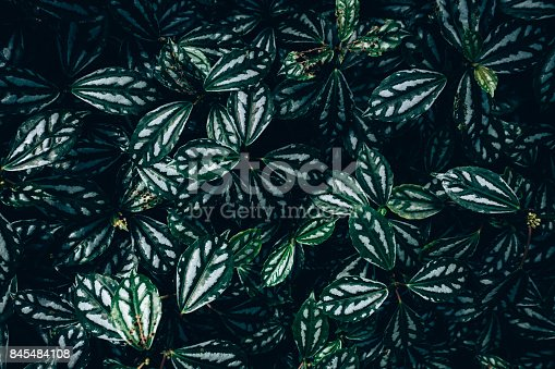 istock Creative layout made of green leaves. Flat lay. Nature concept 845484108