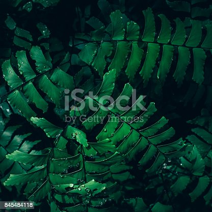 istock Creative layout made of green leaves. Flat lay. Nature concept 845484118