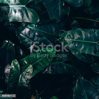 istock Creative layout made of green leaves. Flat lay. Nature concept 845484122